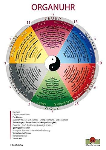 Organuhr Schaubild DIN A3: Schaubild für den Unterricht und die Praxis