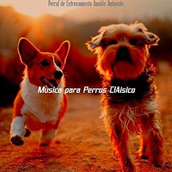 Perros de Entrenamiento Amable Ambiente