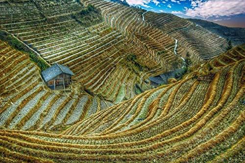 DIY digitale olieverf, rijstveld, China, Azië, rijst Rural