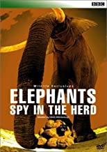 BBC WILDLIFE EXCLUSIVES Elephants Spy in the Herd エレファント・プライベート [DVD]