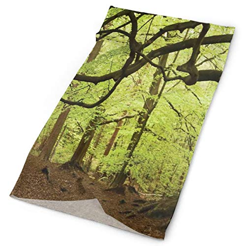 GUUi Headwear Headband Head Scarf Wrap Sweatband,English Woodland Scene with Light Coming Though The Trees Magical Mother Nature Theme,Sport Headscarves for Men Women
