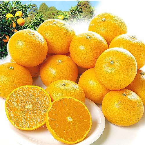 国華園 みかん 和歌山産 紀南のせとか(5kg)ご家庭用 無選別 木熟 トロトロ食感 柑橘 フルーツ