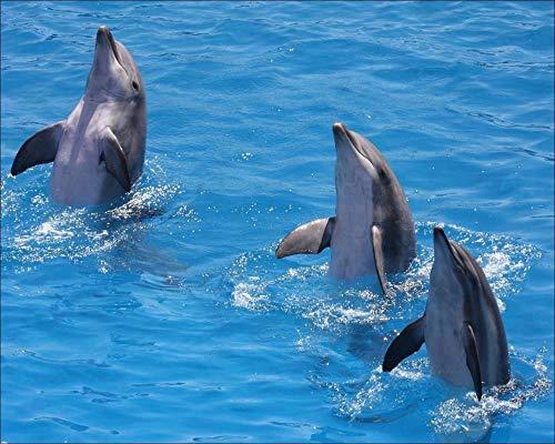 Lsping Puzzle 500 pezzi animali Animales Delfines 52x38cm