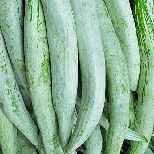 Calabaza de la Serpiente Chachinda - Desi Vegetable Seeds