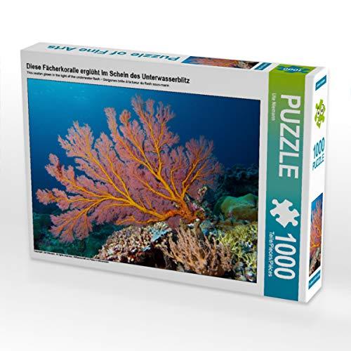 CALVENDO Puzzle Diese Fächerkoralle erglüht im Schein des Unterwasserblitz 1000 Teile Lege-Größe 64 x 48 cm Foto-Puzzle Bild von Ute Niemann