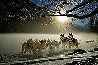 ジグソーパズル、1000ピースの木製パズル、雪の中で走っているスレッド犬50x75cm