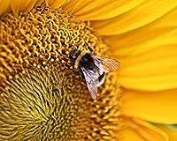 数字でペイントキャンバスカラー原稿蜂昆虫の花マクロ黄色Diy数字でデジタル絵画現代の壁アート油絵ホリデーギフト家の装飾ビッグサイズ カスタマイズ可能 40x50cmフレームなし