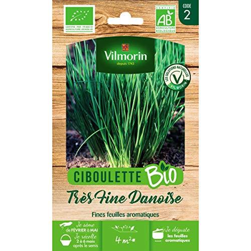 Vilmorin Sachet graines Ciboulette très Fine danoise Bio - Allium schoenoprasum