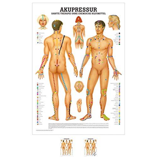 Sport-Tec Akupressur Mini-Poster Anatomie 34x24 cm medizinische Lehrmittel