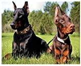 5D DIY Diamond Painting Doberman Pinscher Pet Brothers Diamond Embroidery Paintings by Number Puzzels Wedding Decoration