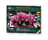 Schipper 609260603 Malen nach Zahlen, Orchideen - Bilder malen für Erwachsene, inklusive Pinsel und Acrylfarben, Triptychon, 50 x 80 cm