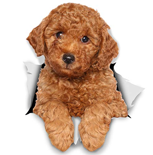 Winston & Bear 3D Dog Stickers - 2 Pack - Red Poodle For Wall, Fridge, Toilet And More Poodle Dog Stickers