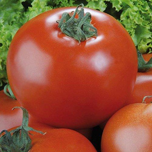 Tomaten (Stabtomaten), 'Phantasia' F1