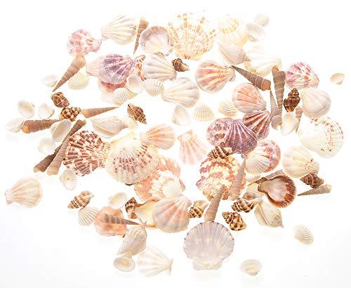 PowerTRC Mixed Beach Sea Shells for Ocean Theme Parties and Weddings | Approx. 100 Sea Shells