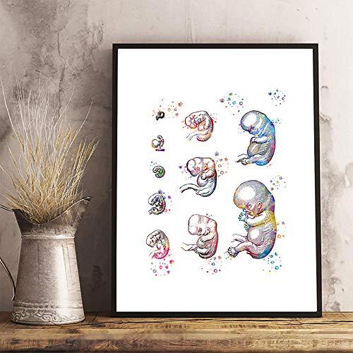 N / A Embarazo Desarrollo del feto Arte Abstracto Carteles Impresión Embrión Biología Arte médico Acuarela Lienzo Pintura Obstetra Regalos-Lienzo en Rollo de 40x60cm