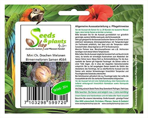 Stk - 20x Mini Ch. Drachen Melonen Birnenmelonen Obst Pflanzen - Samen #164 - Seeds Plants Shop Samenbank Pfullingen Patrik Ipsa