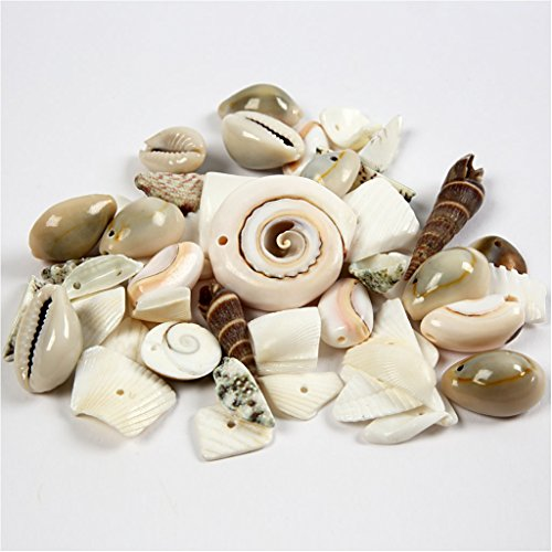 Coquillages de plage, taille 9-40 mm, 120 g.