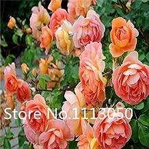 6 : Sale! 200Pcs 10 Kinds Bonsai Polyantha Rose Seeds Organic Blooming Flower Seeds Garden Plant