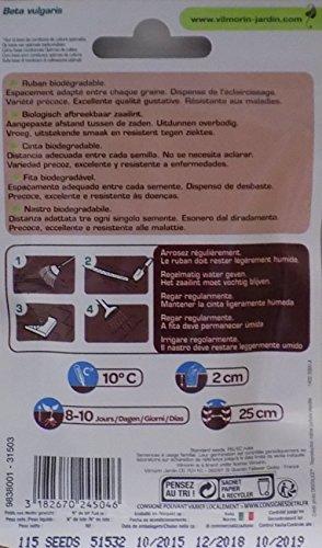 Vilmorin 2 Cintas de 40 Semillas Remolacha DE Mesa Grenade HF1 ...