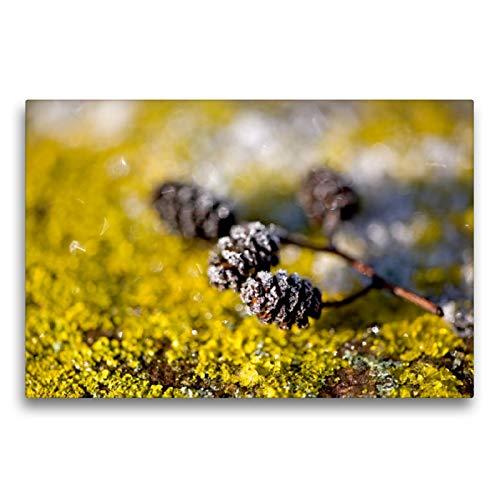 CALVENDO Premium Textil-Leinwand 75 x 50 cm Quer-Format Eiskristalle an Zapfen und Flechten, Leinwanddruck von Bild-erzaehler