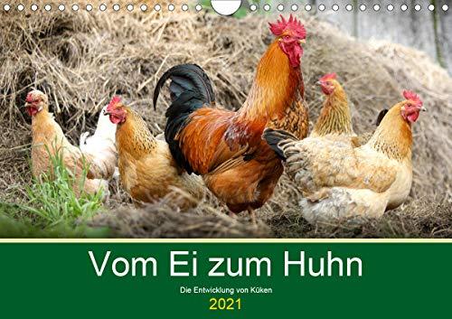 Vom Ei zum Huhn. Die Entwicklung von Küken (Wandkalender 2021 DIN A4 quer)