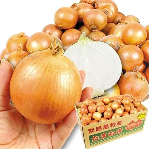 国華園 食品 淡路島産 グルメこたまねぎ 10�s1箱 野菜