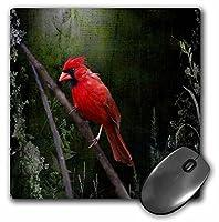 3drose LLC 8x 8x 0.25インチマウスパッド、ワイルドCardinal鳥( MP _ 48670_ 1)