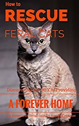 Image: How To Rescue Feral Cats: Discovering the Joy of Providing a Forever Home to Homeless Feral Cats in Need of Rescue (Feral and Abandoned Cat Rescue and Care Book 1) | Kindle Edition | by Carol-Ann Kennedy - Cat Care Expert (Author). Publisher: Project 475 Publishing (August 21, 2015)