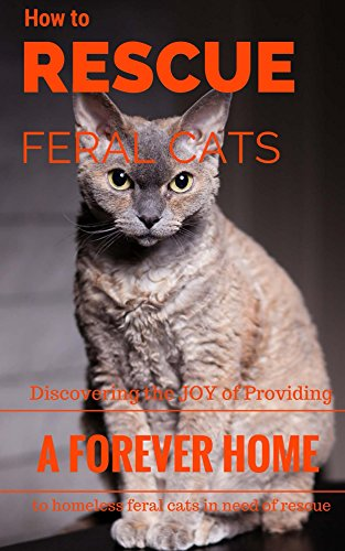 How To Rescue Feral Cats: Discovering the Joy of Providing a Forever Home to Homeless Feral Cats in Need of Rescue (Feral and Abandoned Cat Rescue and Care Book 1) (English Edition)
