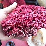 ABCBCA Ornamento Natural 10-12cmNatural Sea Shell Coral Rojo Pescado del Acuario del Tanque de paisajismo mobiliario Sea Marine Inicio decoración de la Boda