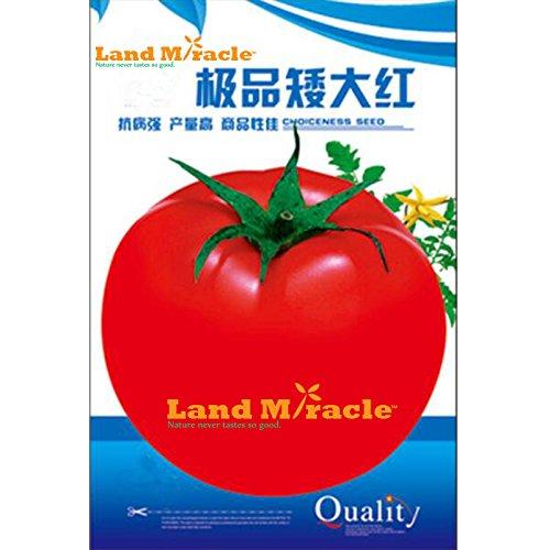 Paquet d'origine, plante naine rouge tomate grandes graines rares, fruits comestibles non ogm et bonsaïs graines de légumes biologiques