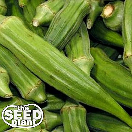 Clemson Spineless Okra Seeds - 50 SEEDS NON-GMO