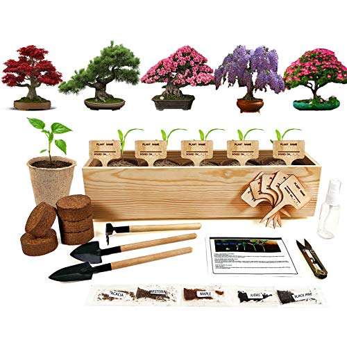 Hand-Mart 5 Bonsai Seeds Window Starter Kit, Maple Wisteria Pine Judas Acacia, Including Everything-Soil, Pots, 3 Garden-Tool, Pruner, Sprayer, Plant Labels, DIY Gifts for Kids Adults