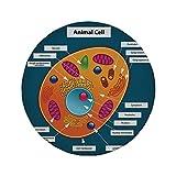 Rutschfreies Gummi-Rundmauspad pädagogisch wissenschaftlich in der Schule Zelle eines Tieres Buntes Display Medizinische Studien Nucleus Decorative Multicolor 7,9 'x 7,9' x3MM