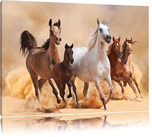 Chevaux occidentaux dans le désert avec poulain Format: toile 80x60auf, XXL énormes Photos complètement encadrés par la civière, l'impression de l'image Art mural avec cadre, moins cher que peintures à l'huile et de l'image, aucune affiche ou poster