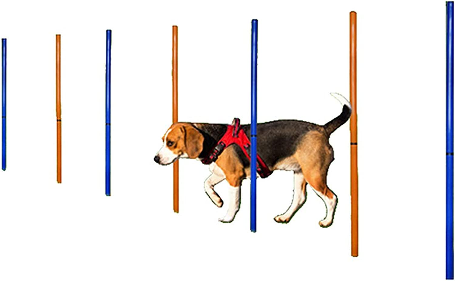 Dog Training Equipment, Pet Agility Barrier Poles Outdoor Sports Dog Play Run Jump Obedience Training Set  12 Poles