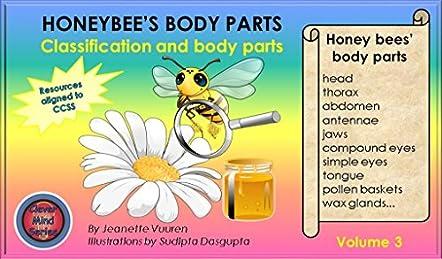 Honeybee's Body Parts