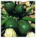 Semillas de calabacín redondas de piacenza - verduras - cucurbita pepo - aprox. 50 semillas - las mejores semillas de plantas - flores - frutas raras - calabacines redondos - idea de regalo