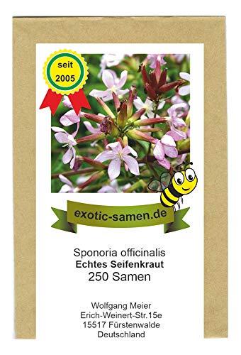Saponaria officinalis - Seifenkraut - Bienenweide - Zier- u. Arzneipflanze - 250 Samen