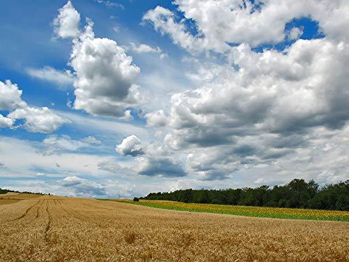 Puzzle De Madera Para Adultos 1000 Piezas Arte Diy Puzzle Campo de arroz bajo las nubes blancas Niños Juguetes Educativos
