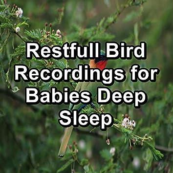 Restfull Bird Recordings for Babies Deep Sleep