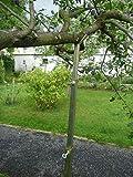 Kevin Schau Teleskop Metall Aststütze für Obstbäume