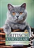 Britisch Kurzhaar: Charme, Kulleraugen und Kuschelfell (Cadmos Heimtierpraxis)