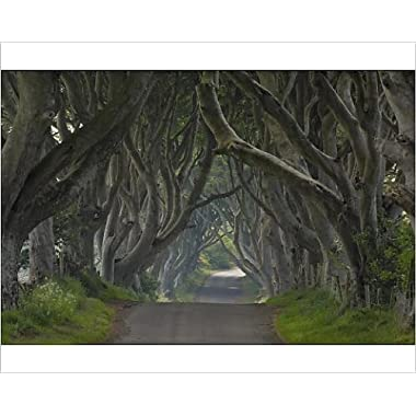 10x8 Print of Tree lined road known as the Dark Hedges near Stanocum, County Antrim (3645666)