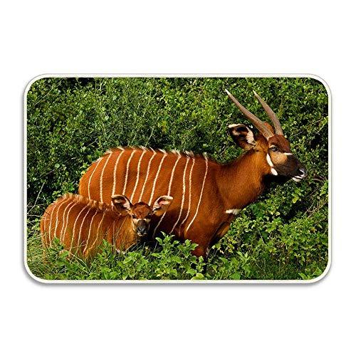 azfvveu African EST Antholopes National Park Aberdare Kenya Rubber Door Mat, Doormat...
