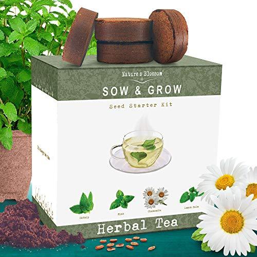 Best growing mint indoors