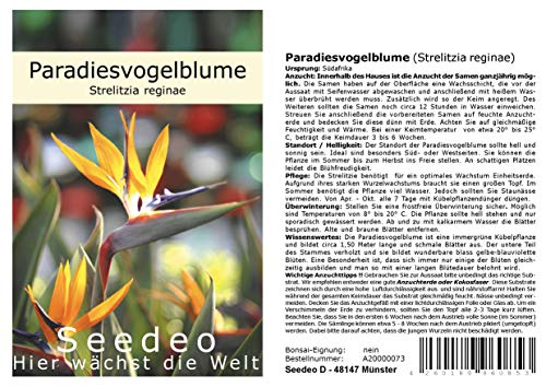Seedeo® Paradiesvogelblume (Strelitzia Reginae) 10 Samen