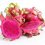 MEIGUISHA Gartensamen-Drachenfrucht Kaktus Saatgut schnellwüchsiger Fruchtsamen bio Obst mehrjährig,essbare süße Fruchtfleisch,exotische Samen für Obstgarten (100,Rot)
