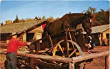 Frontier Town, New York, NY, USA Postcard Sawing Logs by Horse Treadmill at Frontier Town Unused
