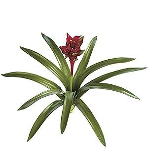 "Silk Flower Arrangements SilksAreForever 28"" Artificial Real Touch Bromeliad Plant Flower Bush -Red (Pack of 4)"